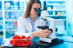 Alimentation : une nouvelle méthode pour mieux contrôler la qualité des aliments