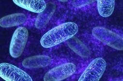 Parkinson, cancer et diabète : une cause commune, l'enzyme parkine ?