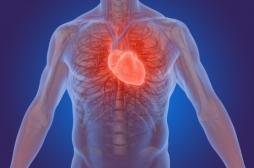 Crise cardiaque: découverte d'une protéine capable de réparer les dommages du cœur