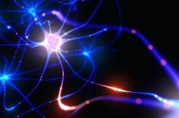 Mémoire et apprentissage reposent sur des connexions neuronales différentes