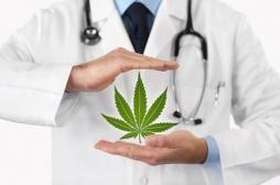 Cannabis thérapeutique : la France en pleine réflexion