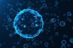 Cancer : une réduction de glucose augmente la puissance des virus oncolytiques