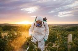 Les pesticides à base de métam-sodium interdits