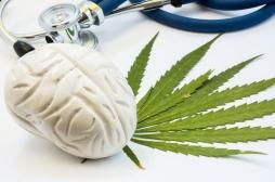 Le cannabis ferait bien diminuer la douleur, mais pas comme on l'imaginait