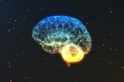 Une nouvelle région du cerveau découverte