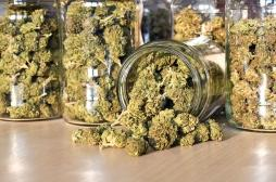 Cannabis légal : de plus en plus de
