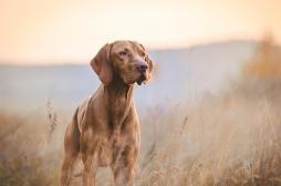 Pseudo-rage : un chien meurt en Moselle