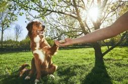 Le chien, remède pour soigner le stress post-traumatique des soldats en Ukraine