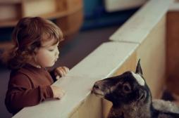 Asthme infantile: vivre à la ferme aurait un effet protecteur
