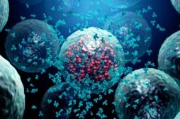 Comment notre système immunitaire mémorise les virus déjà rencontrés