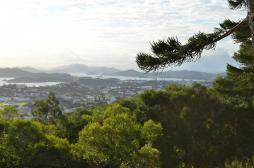 Dengue : la Nouvelle-Calédonie teste la stérilisation des moustiques