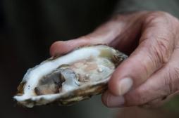 Les fruits de mer sont fortement contaminés par les microplastiques