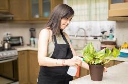 Pesticides : trois Français sur quatre les utilisent à la maison