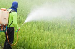 Agriculteurs : un rapport non-publié alerte sur les risques d'exposition