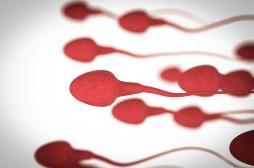 Pilule masculine : des chercheurs français explorent une piste prometteuse