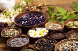 Plantes médicinales : plus de 28 000 espèces répertoriées dans le monde