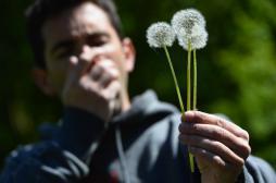 Allergies aux pollens : 12 départements dans le rouge