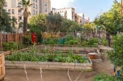 Les jardins potagers pourraient aider à lutter contre l'insécurité alimentaire et les carences nutritionnelles