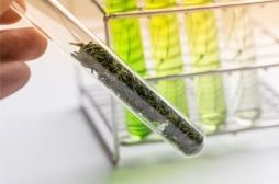 Etats-Unis : un médicament à base de cannabis bientôt autorisé pour soigner l'épilepsie ?