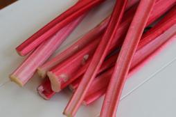 Rhubarbe : une piste nouvelle pour lutter contre le cancer