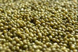 Syndrome métabolique : l'huile de soja plus nocive que l'huile de coco
