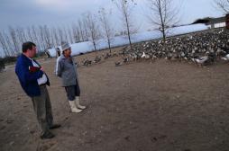 Grippe aviaire : les effets du vide sanitaire sur les éleveurs
