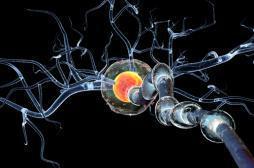 Sclérose en plaques : le rôle clé de la testostérone