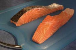 OGM : les Etats-Unis autorisent un saumon génétiquement modifié