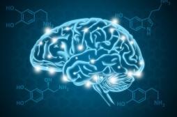 La sérotonine contrôle notre patience