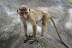 Sommeil : pourquoi les hommes dorment moins que les singes