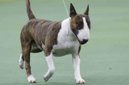 Rage : un chien infecté sème le trouble dans la Loire