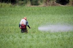 La France exporte dans plusieurs pays un herbicide qu'elle interdit