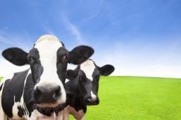 Les animaux d'élevage font les résistances aux antibiotiques