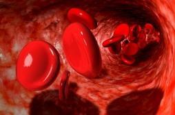 Le potassium, clé du rythme circadien des globules rouges
