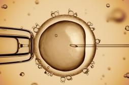 Au Etats-Unis, des scientifiques développent un embryon homme-mouton