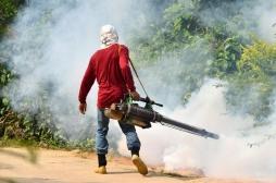 OMS : Un traitement prometteur contre le paludisme