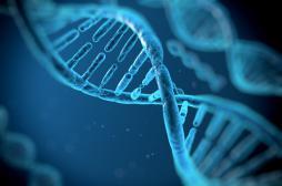Manipulations génétiques : 76 % des Français pour un usage thérapeutique