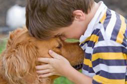 Cerveau : pourquoi les chiens nous comprennent