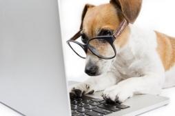 Revues scientifiques : un chien recruté pour la relecture d'articles