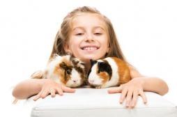 Mauvais conte de Noël: le cochon d'Inde, la petite fille et la teigne…