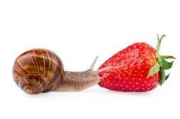 Pour perdre du poids, il faut manger lentement