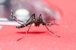 Fièvre jaune : l'OMS étend la vaccination en Angola