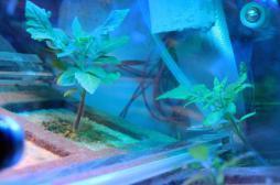 Espace : l'urine pourrait aider à cultiver des légumes sur Mars
