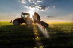 Pesticides: dangers des fongicides SDHI retrouvés dans l'alimentation
