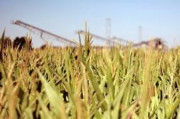 OGM : la recherche polluée par les conflits d'intérêt