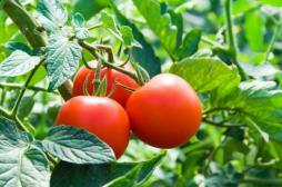 Alimentation : les Français de plus en plus adeptes du bio