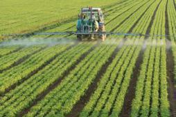 Bordeaux : la famille d'un viticulteur décédé met en cause les pesticides