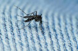 Zika : un homme de 81 ans atteint d'une affection grave au cerveau