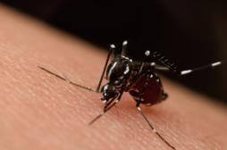 Zika flambe à Porto Rico