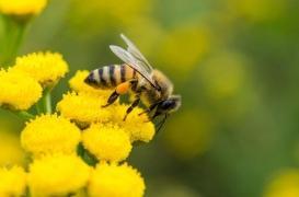 Que faire en cas de piqure d'abeille, de guêpe ou de frelon ?